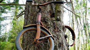 ht_bike_tree_tk_130102_wblog