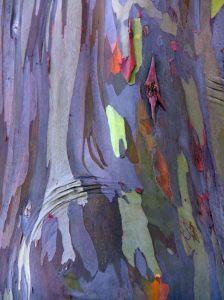 Rainbow-trees-3