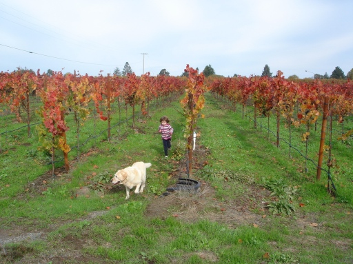 My backyard...& niece & dog